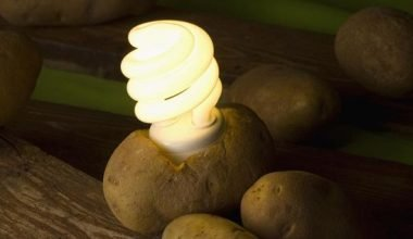 LED bulb working by placing it in potato