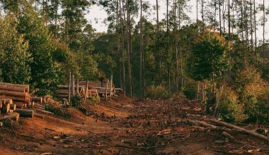 Effects of Deforestation on Animals