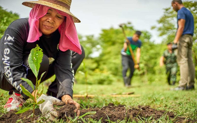 Afforestation-Causes and Effects