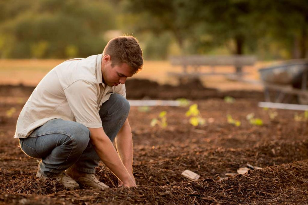 Employment Opportunities in Afforestation