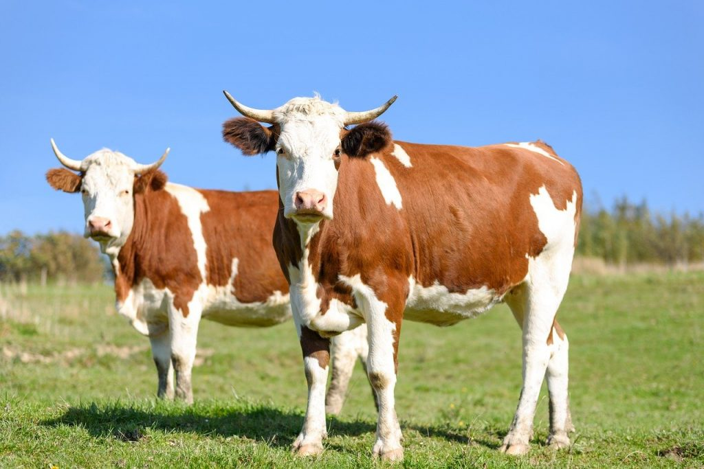 Growing Livestock Naturally on Sustainable Farms
