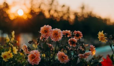 Flowers under sunset