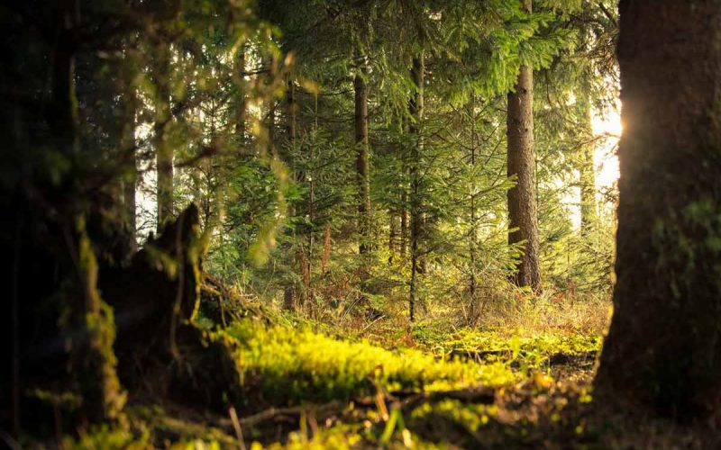 Forest Products and their Uses