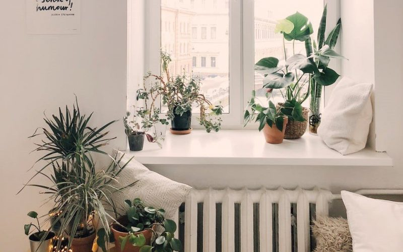 Pros and Cons of Horticulture