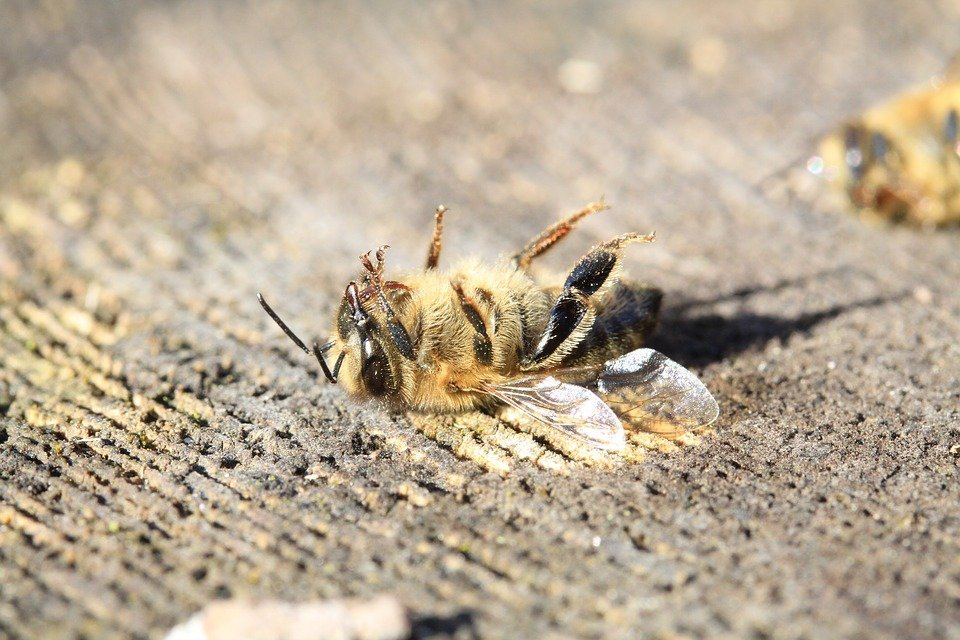 Pesticide Effect on bee populations
