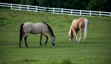Grazing Horses Helps the Environment