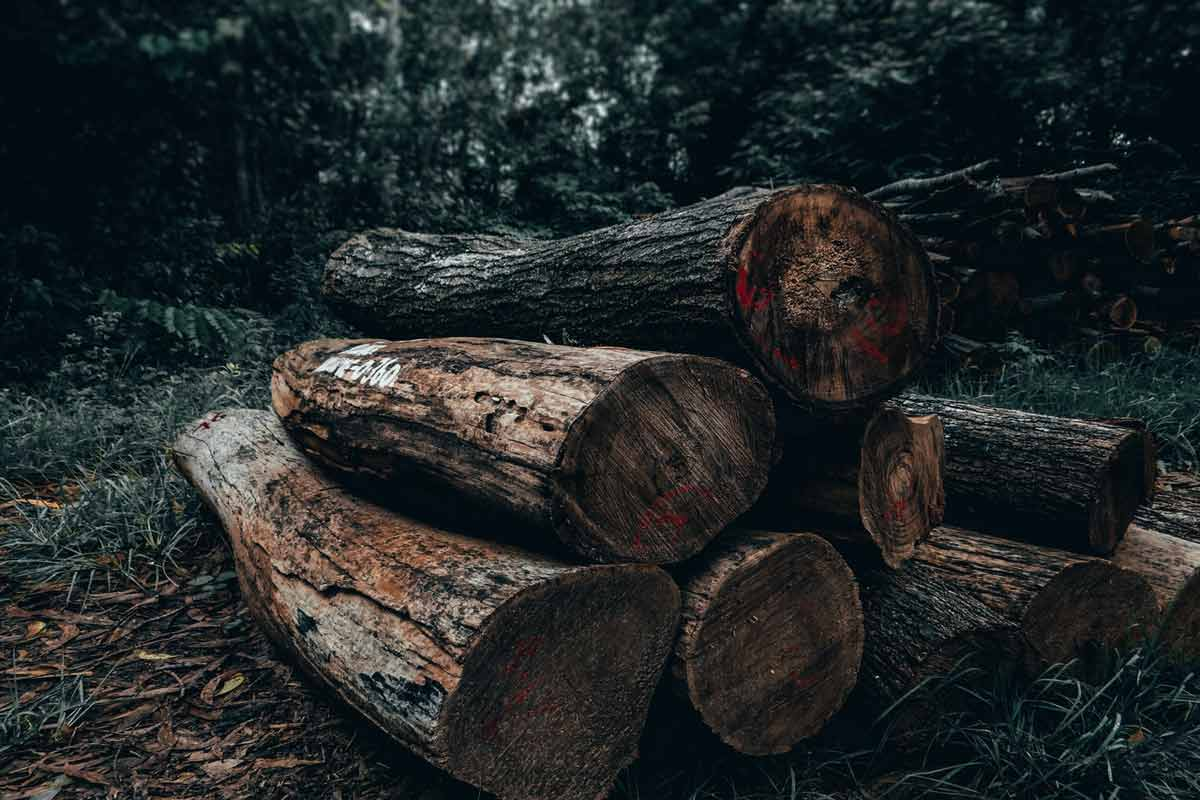 Forest Products cause Deforestation