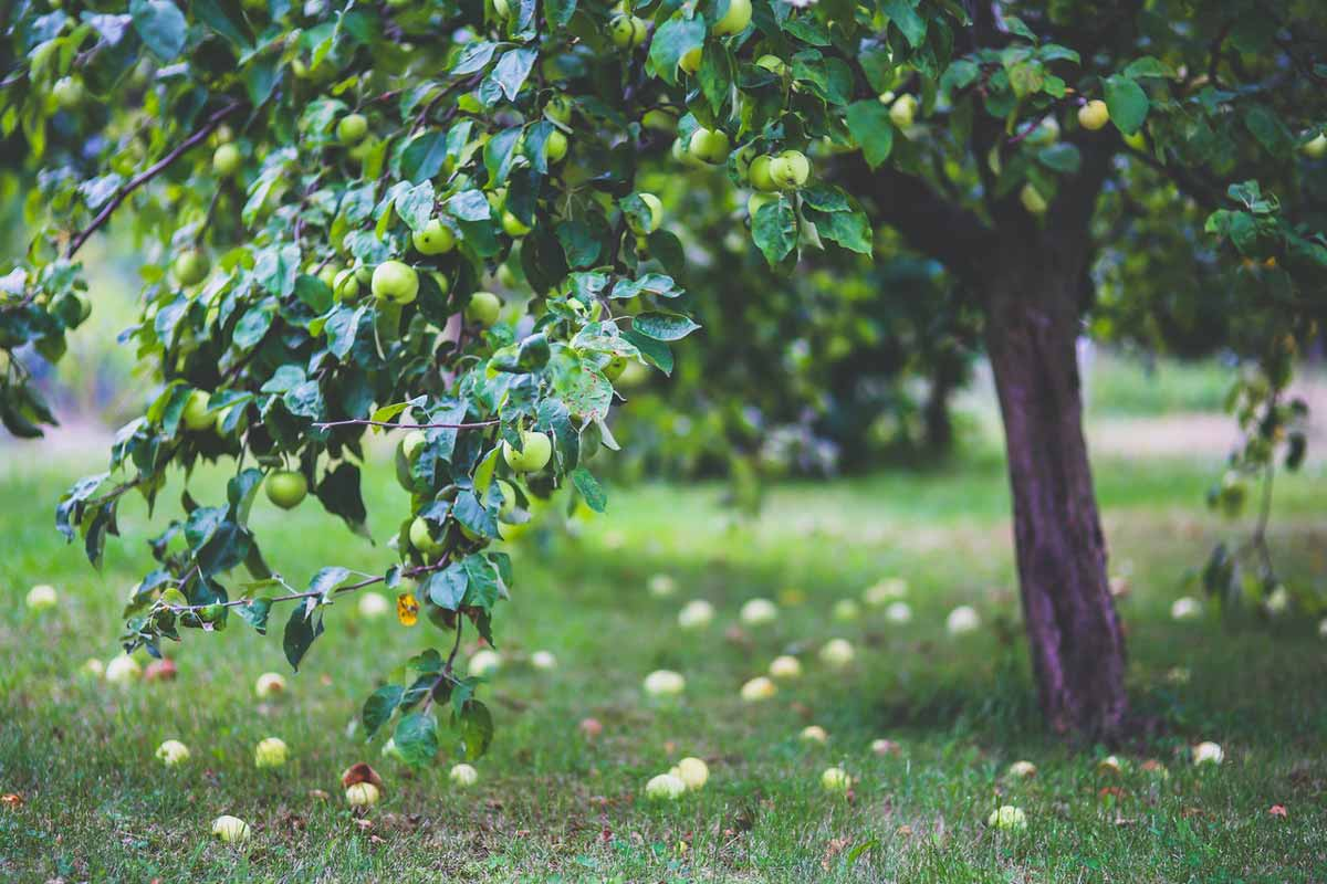 Fruits as Forest Products