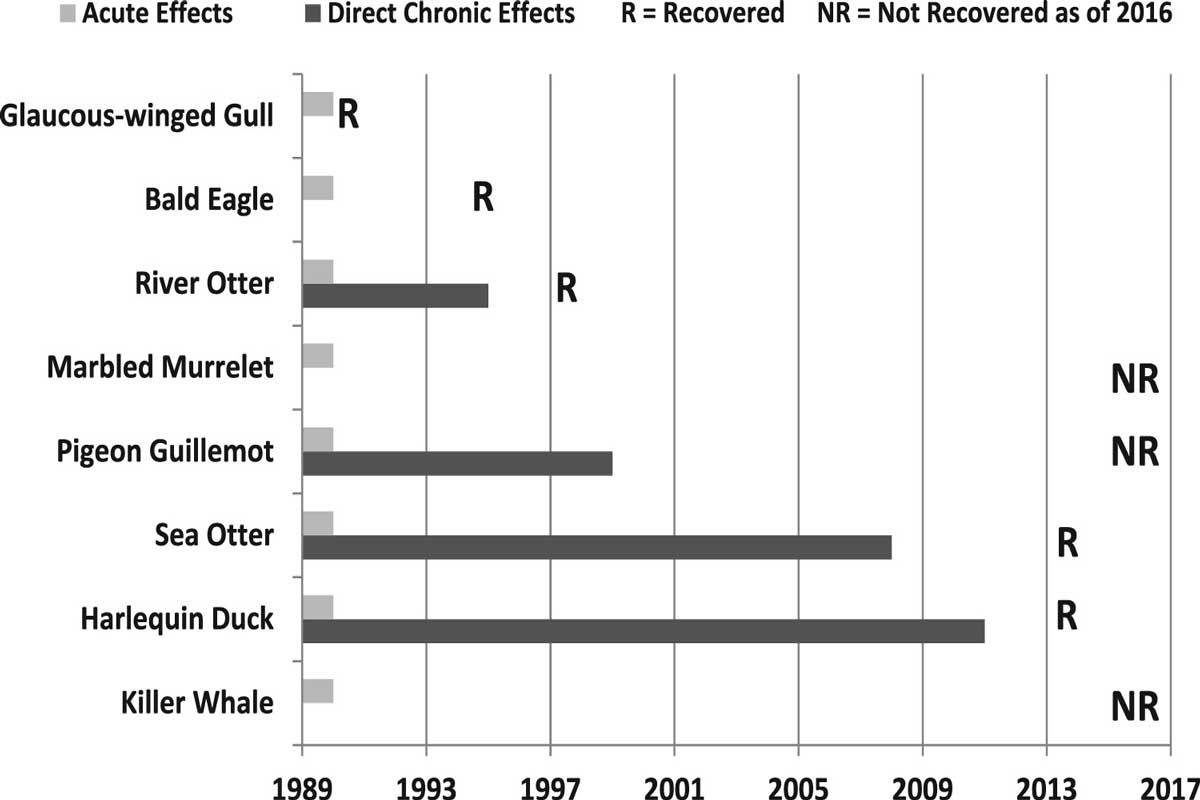 Oil spill effects species recovery
