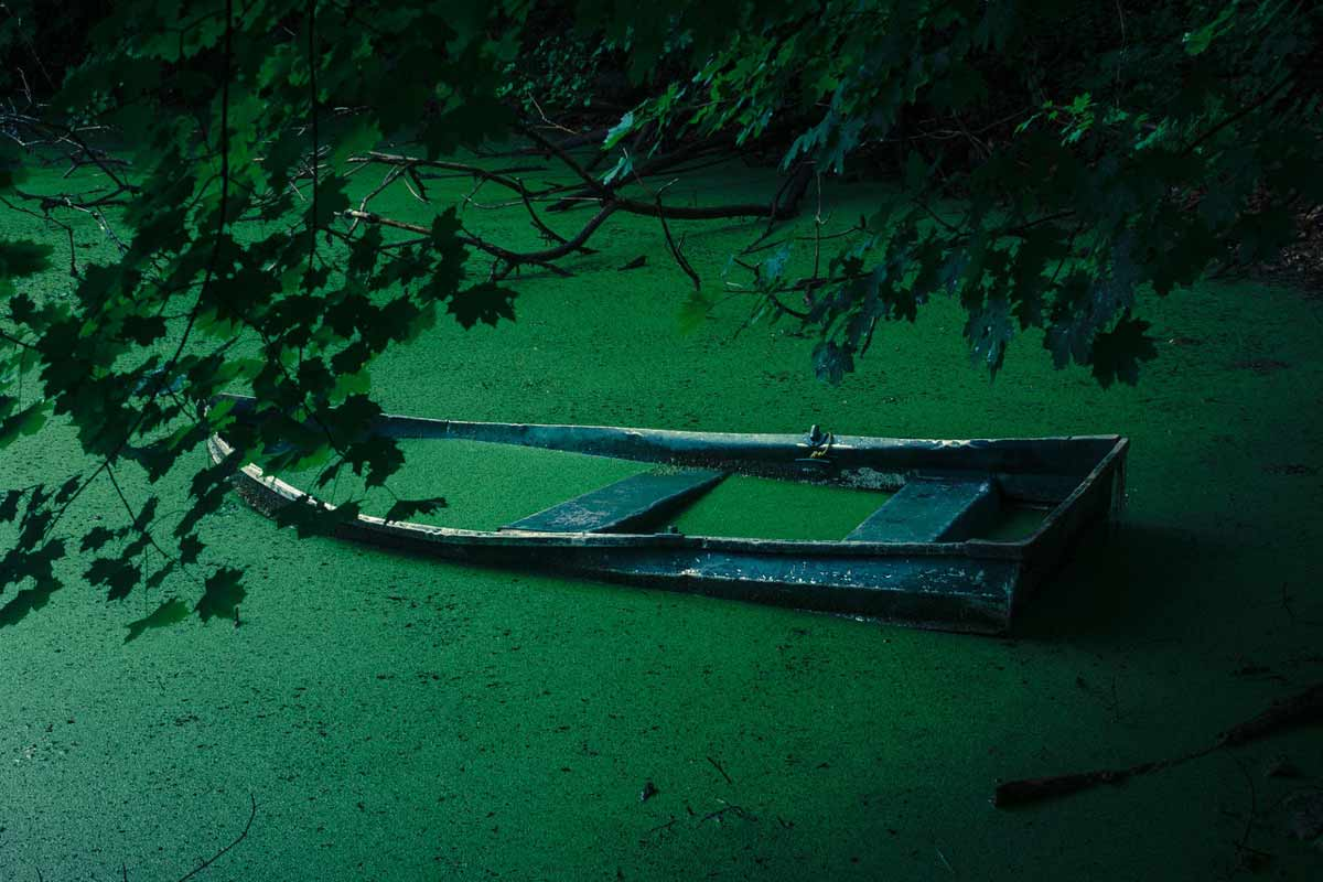 Cultural Eutrophication is a side effect of Nutrient Pollution