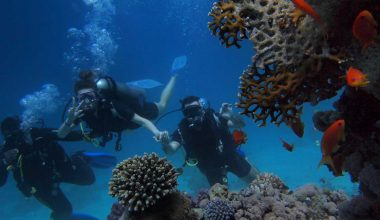 Tourism has major effects on Coral Reefs