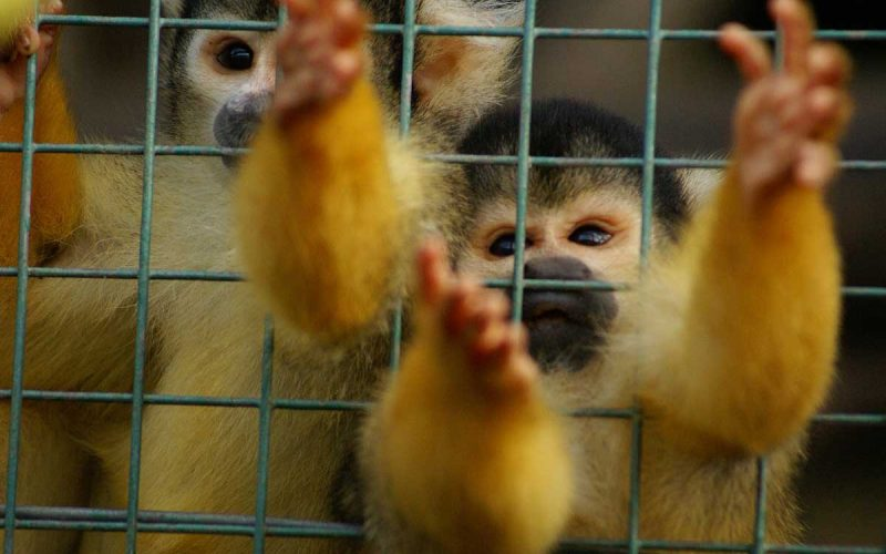 Most Shocking Illegal Pet Trade Facts
