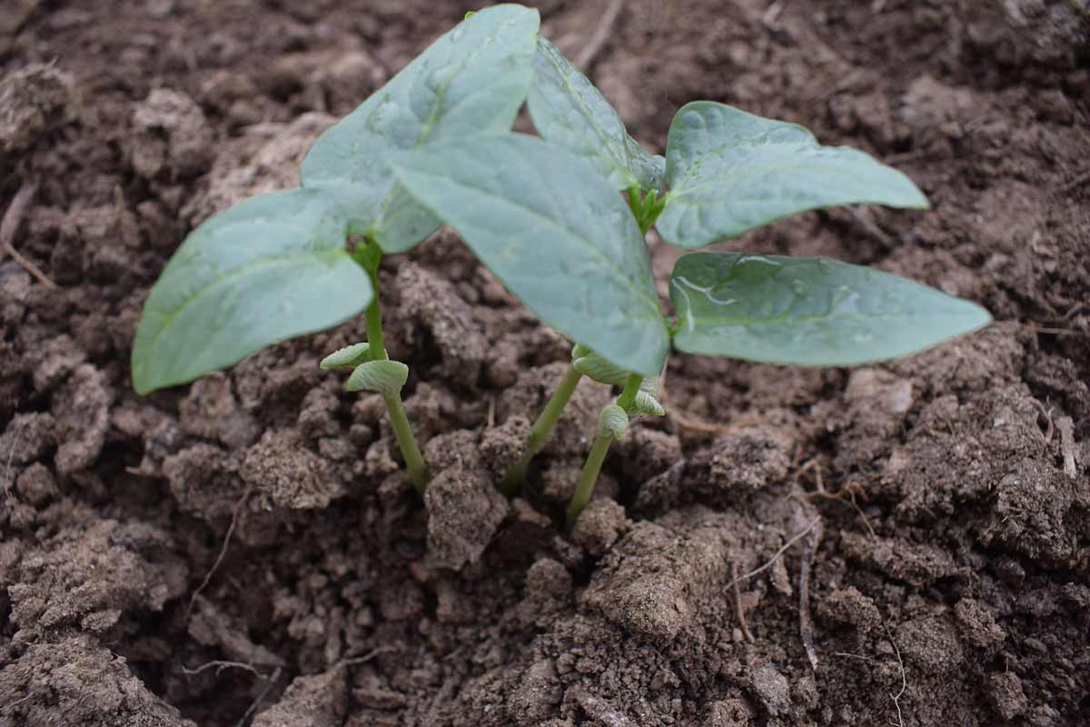 Keep your seedlings in check