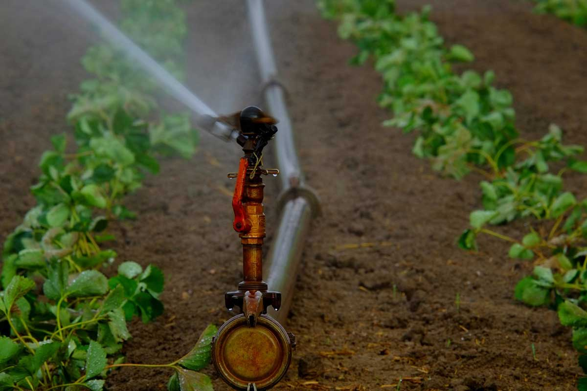 Water Management is necessary for Climate change solutions
