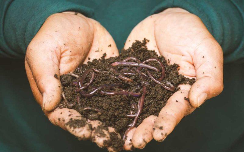 Humus in Soil - Benefits