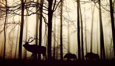 Animal life in the Forest