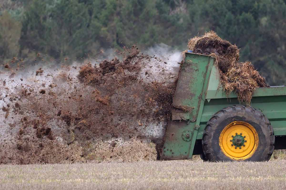Manure and Humus Comparison. Manure being spread on field