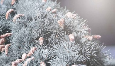 Types and Benefits of Cedar Trees